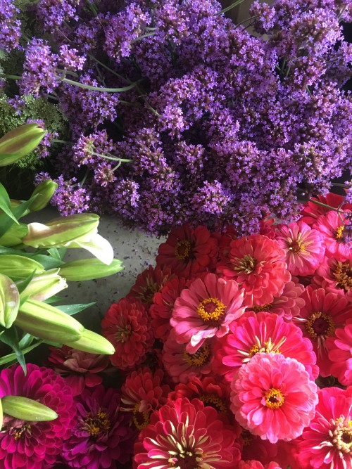 VERBENA AND ZINNIAS