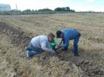 Potato digging family challenge 2015