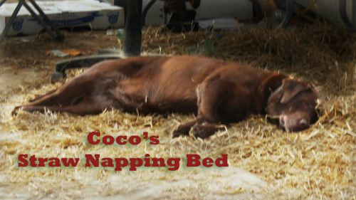 Coco is napping