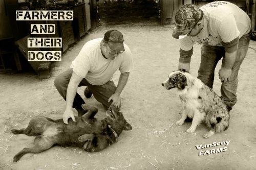 Farmers & Their Dogs