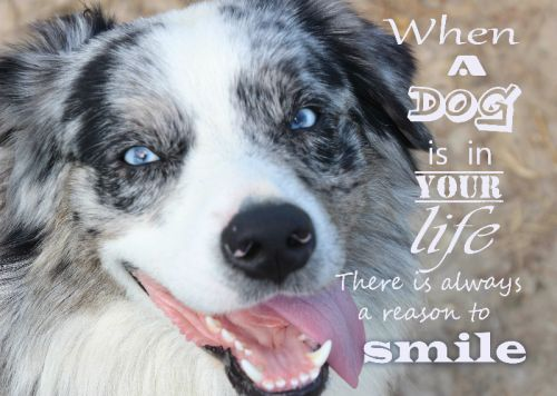 Dogs Make You Smile