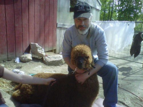 Dan with Henry, just before his first shearing 2010