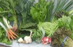 full share week 5: bok choi, beet greens, lancinato kale, swiss chard, green wave mustard, spinach, red and green leaf lettuce, carrots, radishes, green onion, green garlic, garlic and sorrel