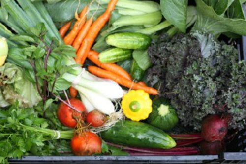 2011 vegetable share