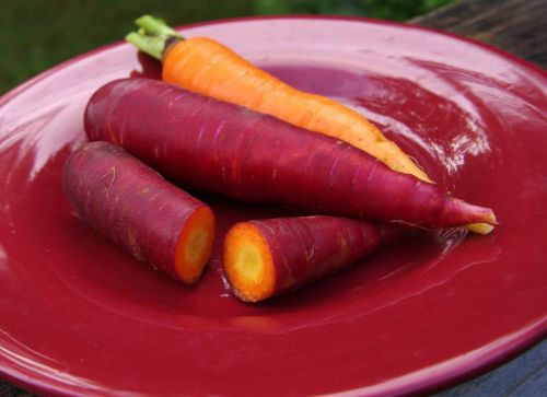 Dragon Carrots