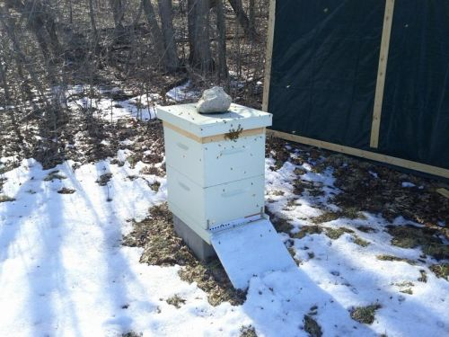 Bees on the Farm
