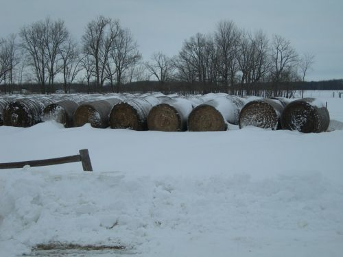 Round hay bales stored for winter feeding