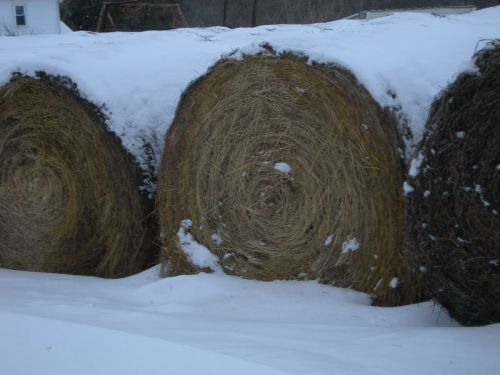 Round hay bales used for winter feed