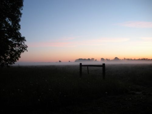 Foggy morning sunrise over the pasture