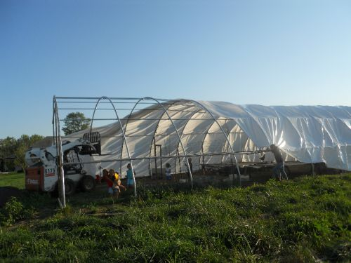 pulling tarp over greenhouse