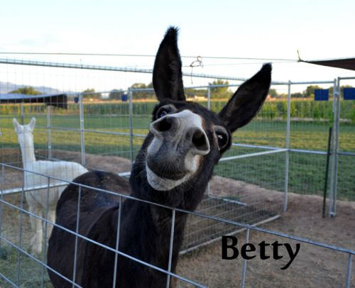 Animal Staff: Betty