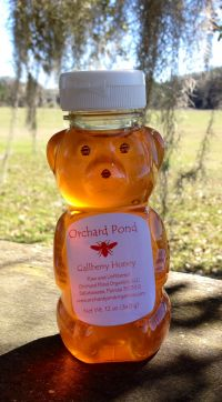 Gallberry Honey: 12 oz. Plastic Bear