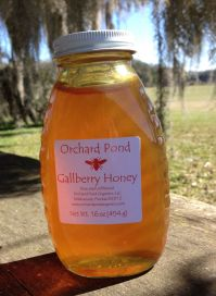 Gallberry Honey: 1 lb. Glass Jar