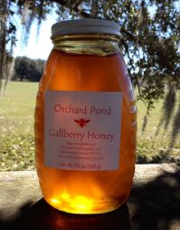Gallberry Honey: 2 lb. Glass Jar