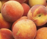 Peaches (Aug 14th Distribution)