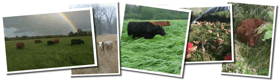 NewGrass Farm, LLC