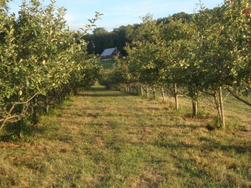 Apple Trees at OCP