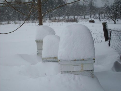 bee hives with snow hats