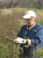 Andrea harvesting Wild Carrot Seed