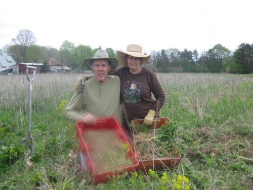 Matthias and Andrea harvesting Valerian Root