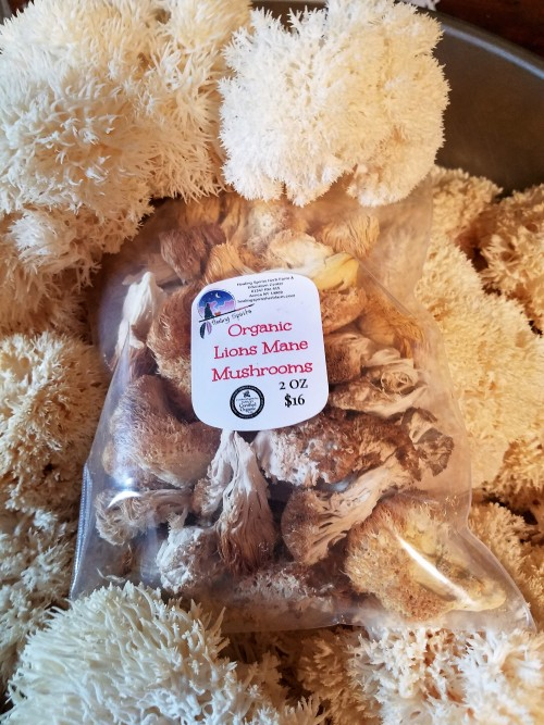 Lions Mane Mushrooms Dried & Organic