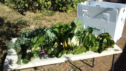 1st full share CSA box 06/13/16