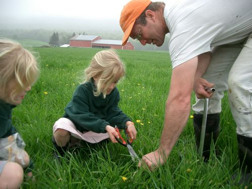 Cutting forage samples for testing.