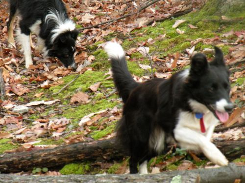 Mac and Pip enjoying time in the woods.