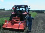 Tilling in field peas and oats