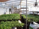 A busy greenhouse