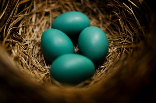 robins' eggs