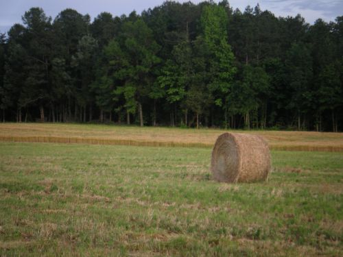 Hay Bale in front of Barley field