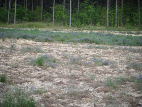 Clay Field Being Converted to Pasture