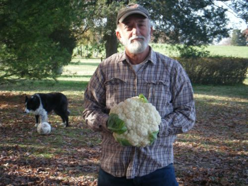 Murray and cauliflower