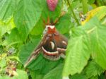 Justin found this fella on the berry plants