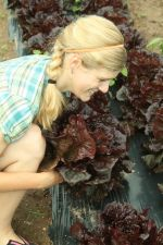 Amanda harvests our beautiful lettuce