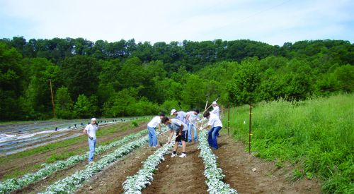 Here the athletes are mounding up the potato plants