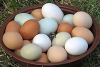 Pasture Raised Eggs, the way nature intended.