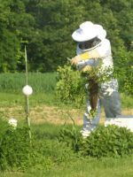 Jared is 'hiving' a swarm of bees
