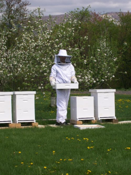 Jason is checking the bees.