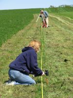 Measuring for Planting Baby Trees