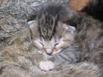 Our Farm Cat Had Kittens