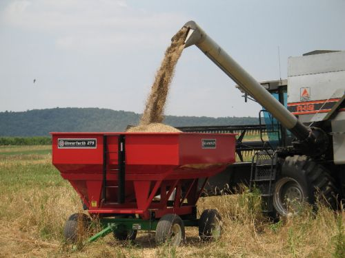 Putting Rye in the Gravity Wagon