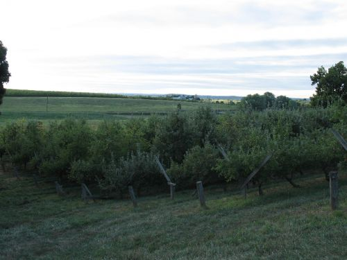 One of Our Orchards