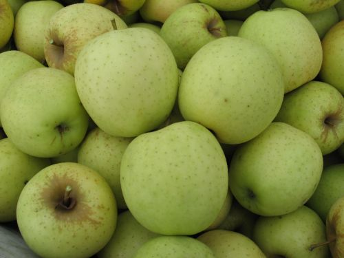 Golden Delicious in the Bin 2010