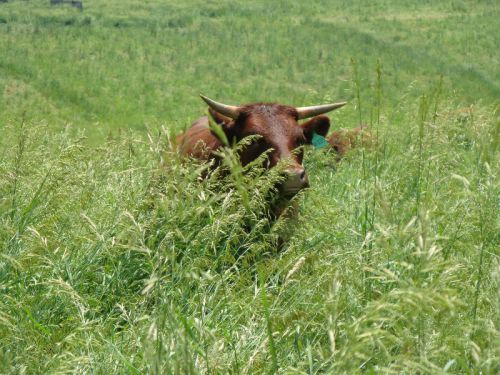 One of the girls browsing through their new paddock June 2011
