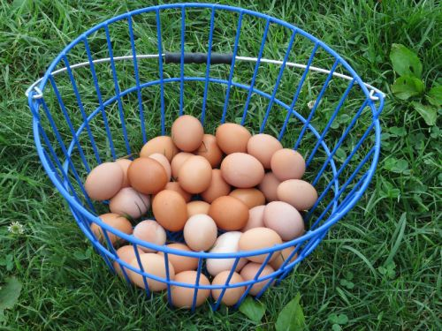 Extra fresh brown eggs from our chickens