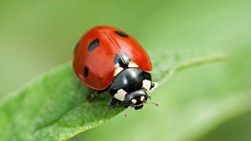 Lunch & Learn: Pest ID-The Good, The Bad, & The Ugly! Saturday, May 6   11am-12:30pm