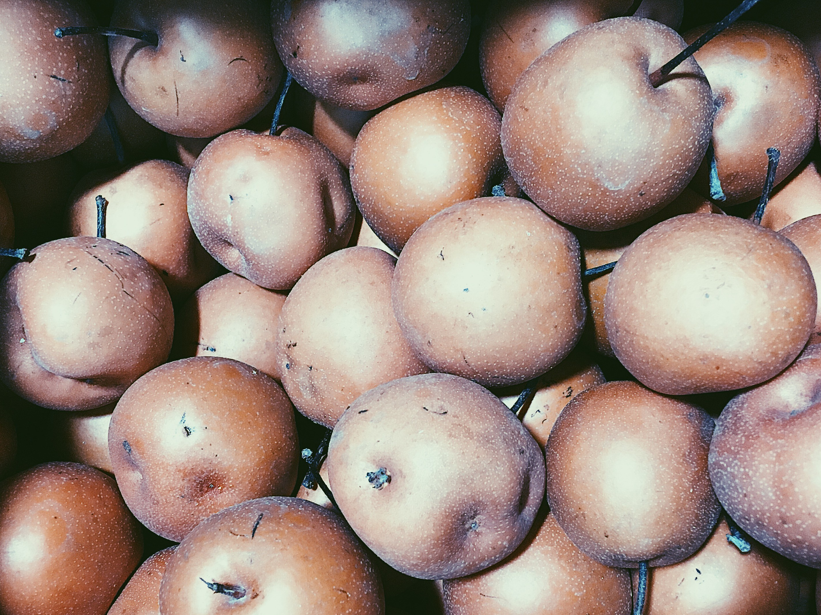Asian Pears from Oriana's Orchard