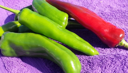 new mexico highlander pepper
